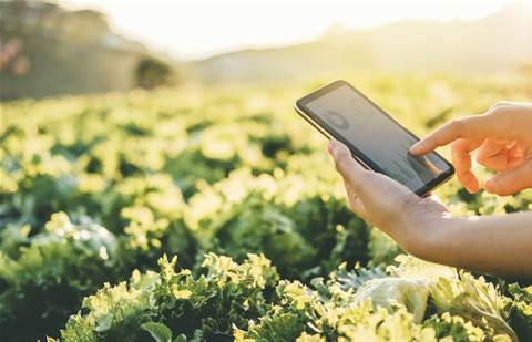 """CRN Impact Awards: Best Technology Services deploys IoT tech to create """"smart"""" farms across Victoria"""