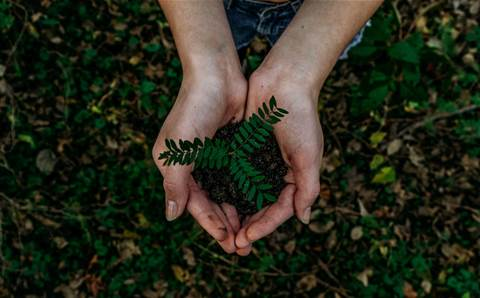 Carbon offsetting: What is it and why should small businesses care?