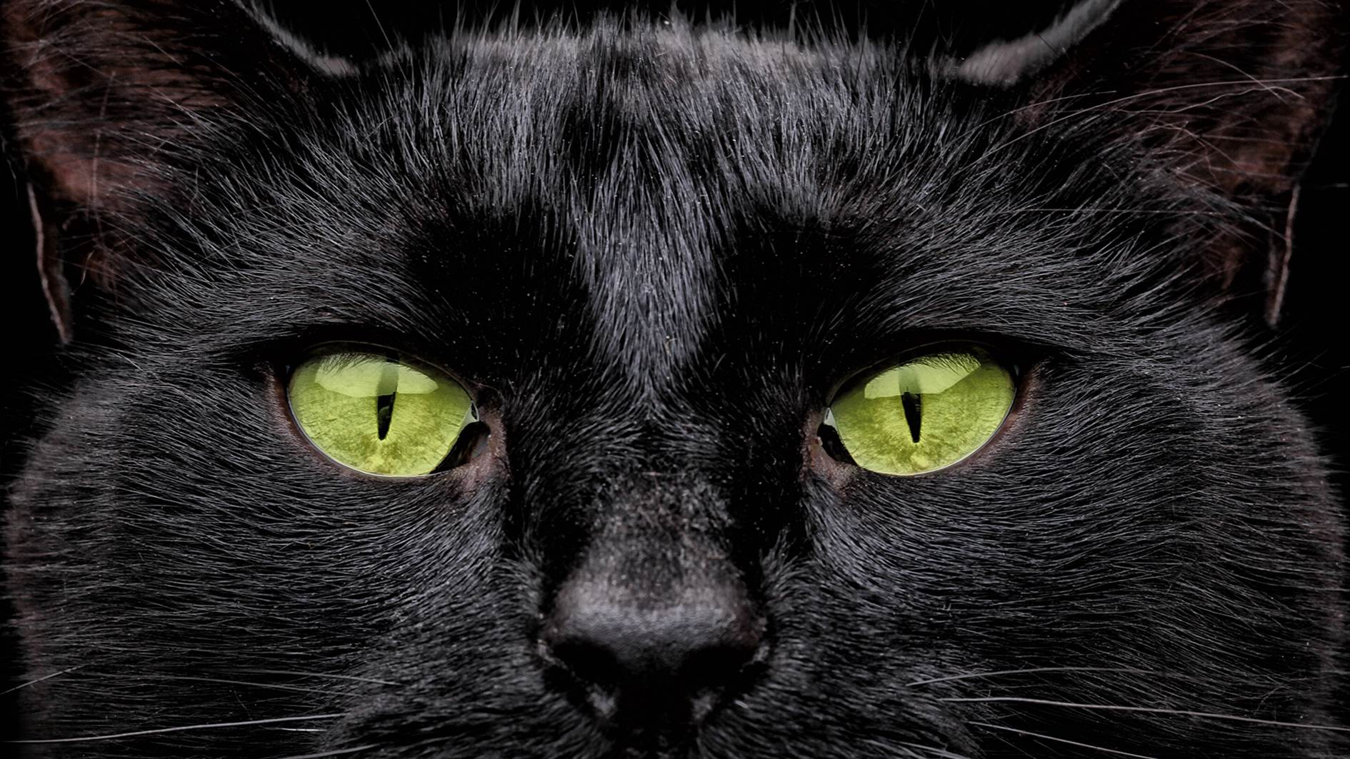 DADDO: Me … superstitious? Not a chance