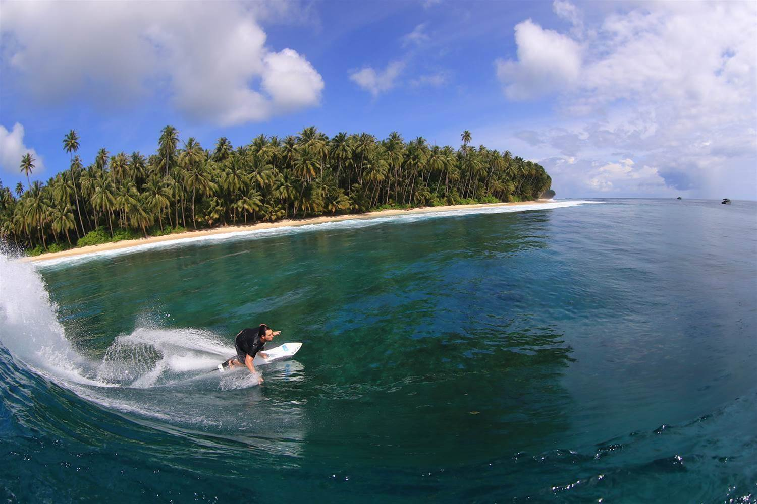 The Telo Surf Report