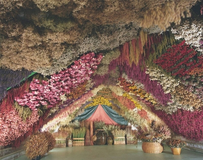 a wonderland of dried flowers