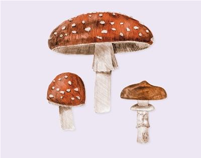 download this mushroom wallpaper