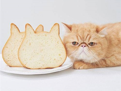 get a load of this cat bread
