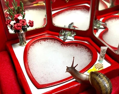 welcome to snail world