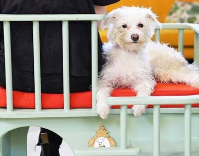 inventor simone giertz created a chair for needy pets
