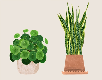 finally! an online guide to indoor plants!