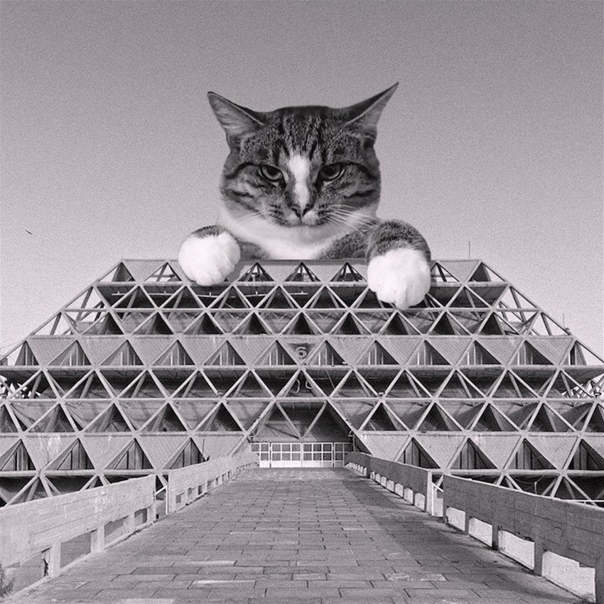 cats on brutalist buildings
