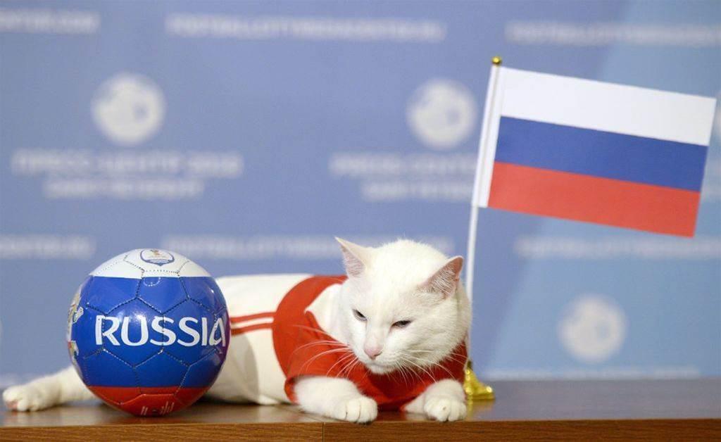 Psychic cat predicts Iran win