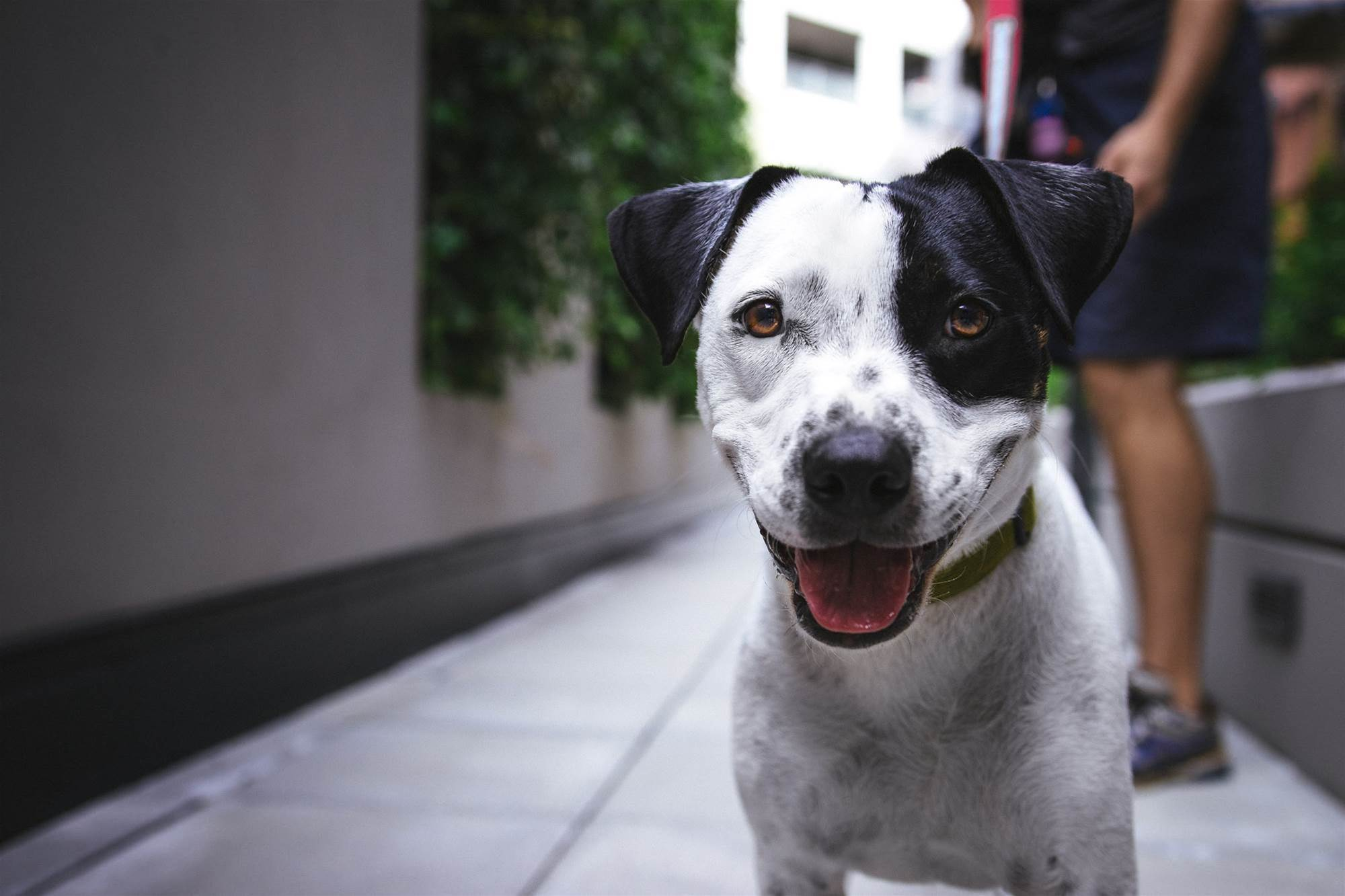 Internet connected dog shelters appearing in US