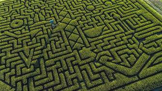 Maze ransomware cleanup costs spiral