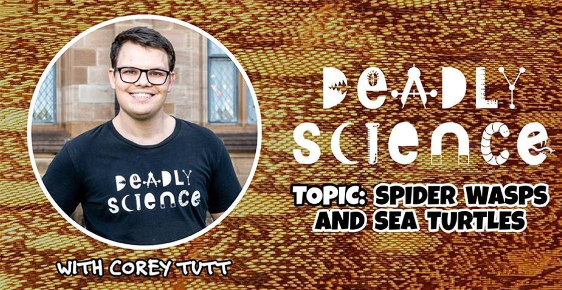 Deadly Science: Spider Wasps and Sea Turtles