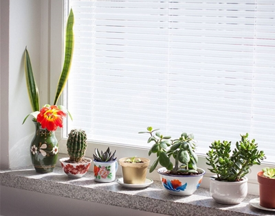 tips for decorating your house with indoor plants
