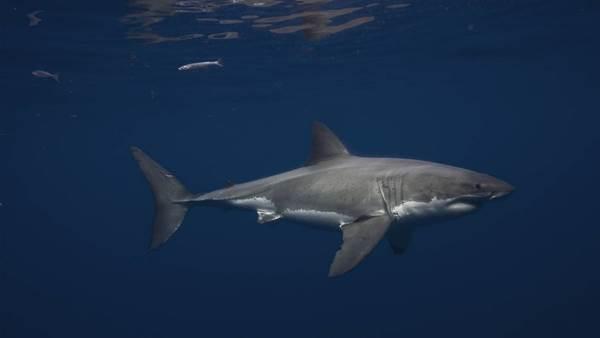 Shark Attack Survivor Dave Pearson Asks: Have We Become Desensitised to Sharks?