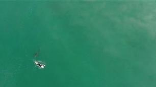 Wilko Narrowly Dodges Shark
