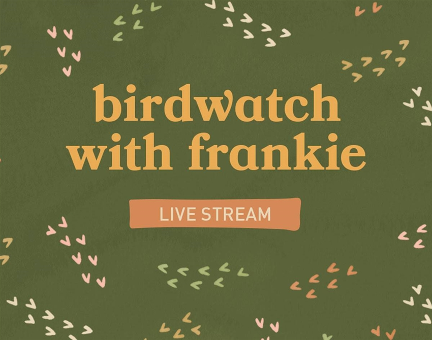 join us for some virtual birdwatching