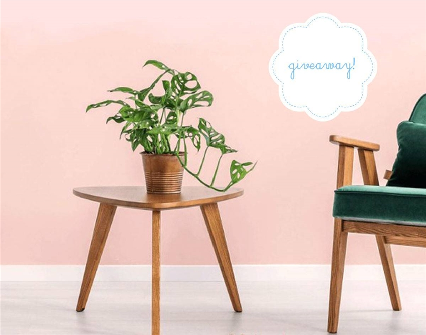 stuff mondays – the indoor plant co