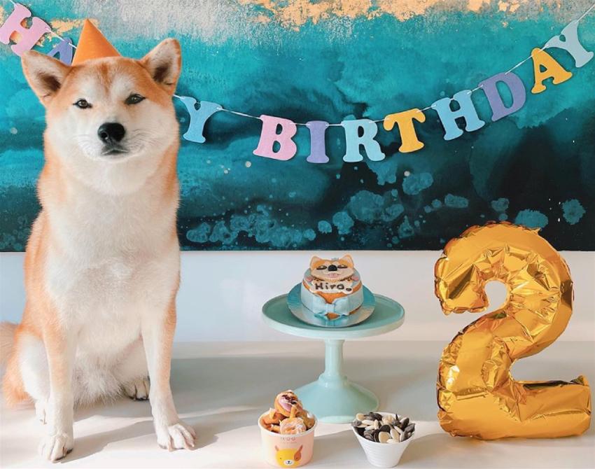 chews + party pet events