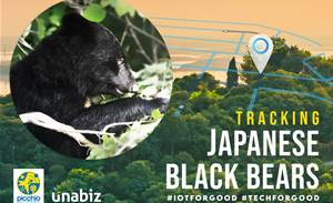 Wildlife Research Centre in Japan use IoT to track roaming Black Bears