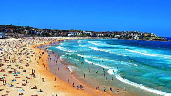 When Sharks Becomes a Bondi Problem