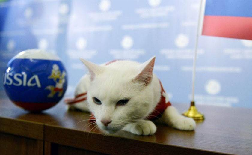 Oracle cat to predict Morocco v Iran result