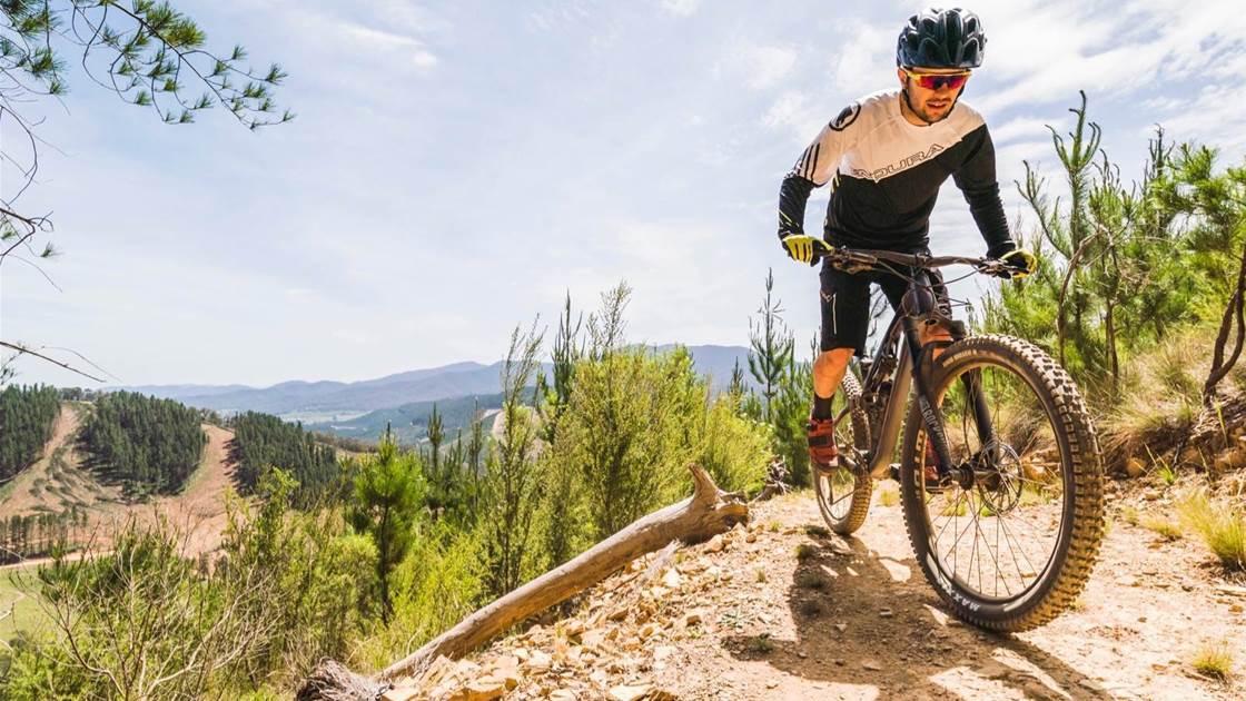 Alpine Foothills: Bright