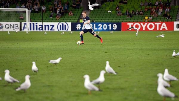Melbourne Victory vs Daegu FC Player Ratings