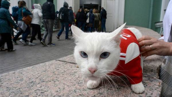 World Cup oracle cat to predict winner of France-Belgium