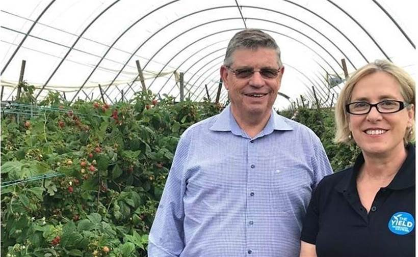Major Australian produce supplier will use AI to predict berry yield