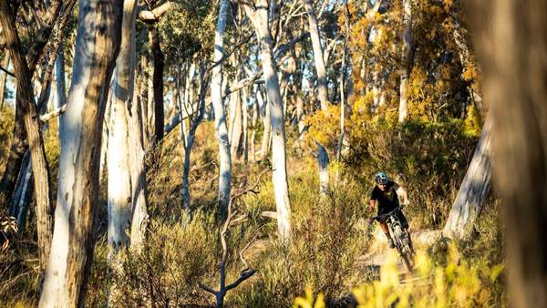 Skills: The Five Best Tips to Improve Your Riding