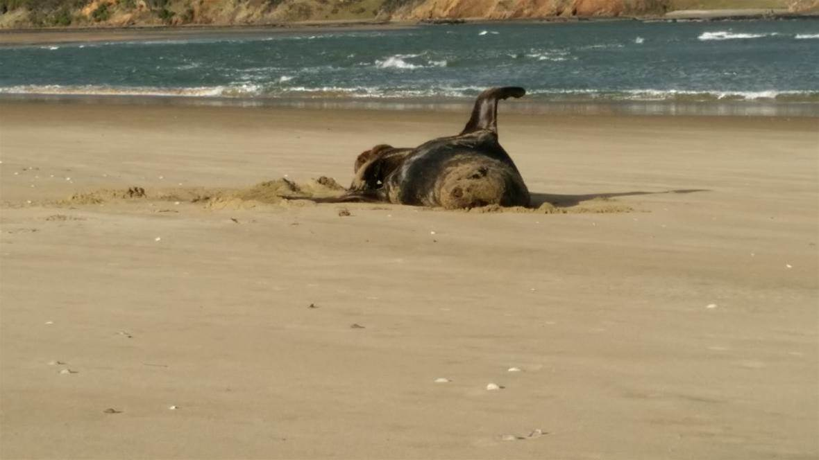 USB stick survives being eaten by seal, pooped out and frozen for a year