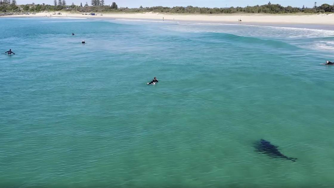 Drone Operator Takes it Upon Himself to Protect Surfers