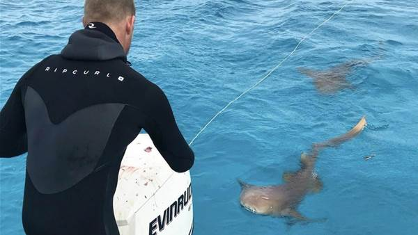 Mick Fanning Wants to Save Sharks