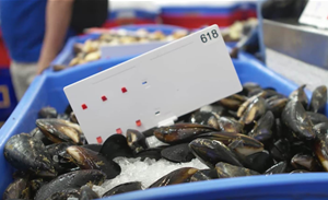 Sydney Fish Market lures consortium to test IoT