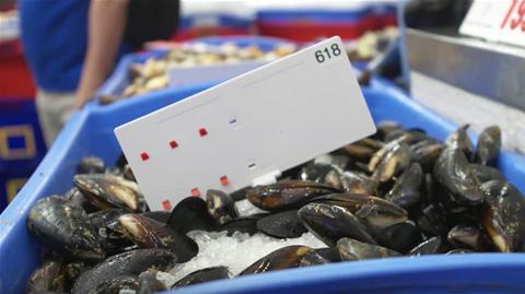 Sydney Fish Market lures consortium to test IoT