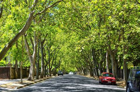 City of Unley IT overhaul paves way for digital 'urban forest'