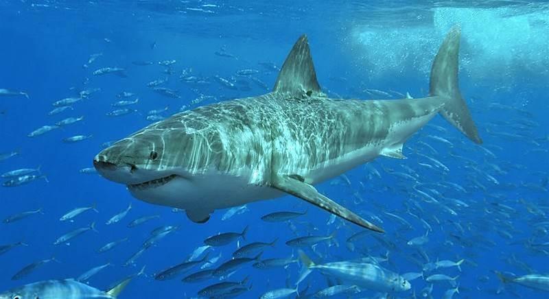 A Few Facts Behind Shark Attacks