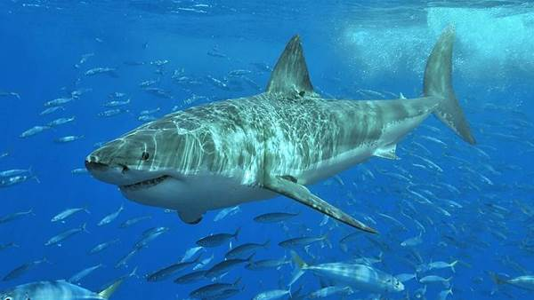 A Few Facts Behind Shark Attacks