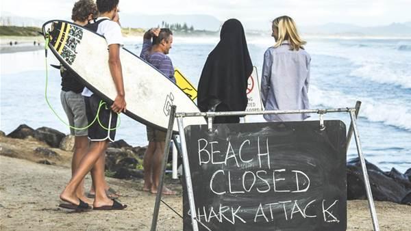 Shark Attack in Byron Bay
