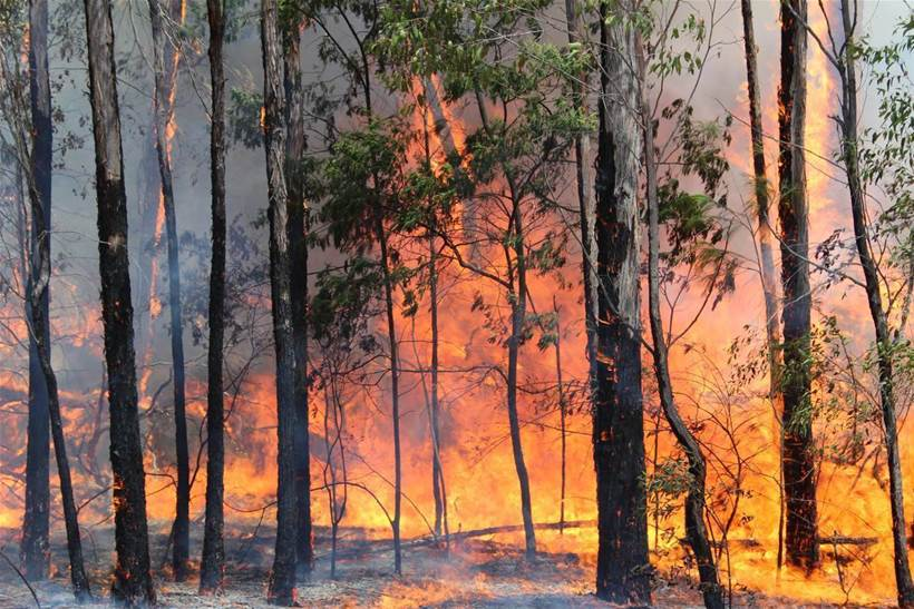 Using tech to save wine from bushfire smoke