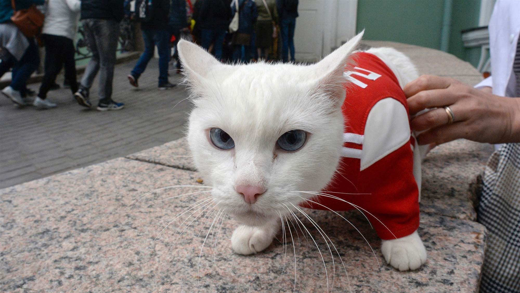 Sartorially-biased psychic cat forecasts victory for Russia over Egypt