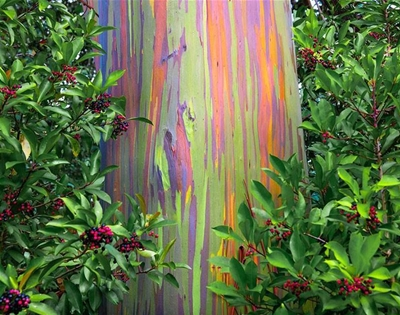 the real-life trees that look like paintings
