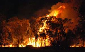 Services Australia put face matching to work for bushfire relief payments