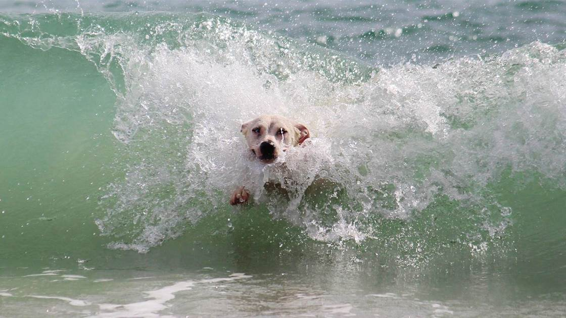 So Your Dog Surfs?