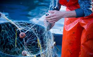 Qld looks to automated fish recognition to reel in catch cheats