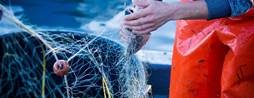 "Sydney Fish Market in ""bait to plate"" fish tracking project"