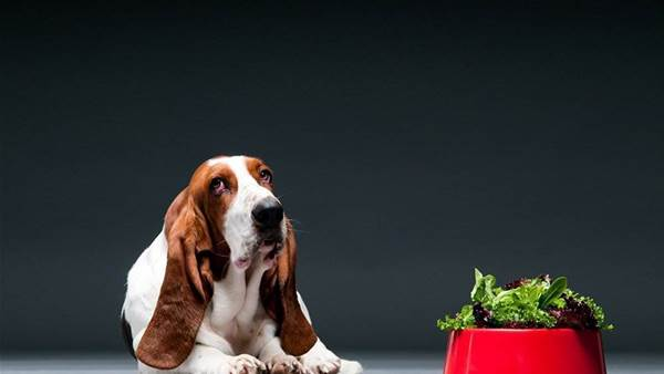 Is It OK To Feed Your Dog Fruits And Vegetables?