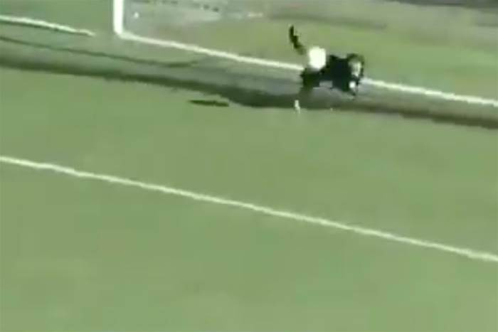 Watch! Dog runs on to field to make goal-line save