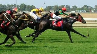 Fitbit for horses: tracker used by trainers of Melbourne Cup Carnival winners