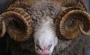 Australian wool sales stopped by ransomware attack
