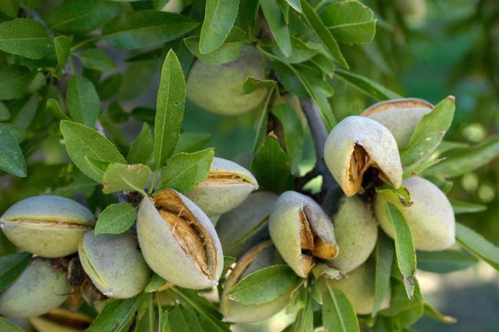 Aussie almond grower in IoT, blockchain experiment